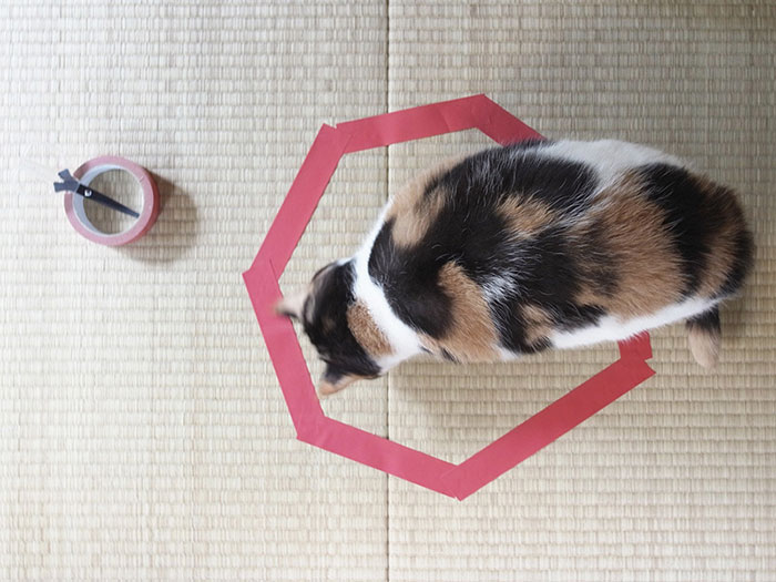 cat-circle-2