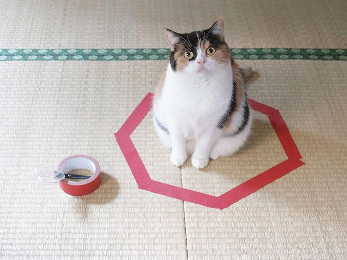cat-circle-4