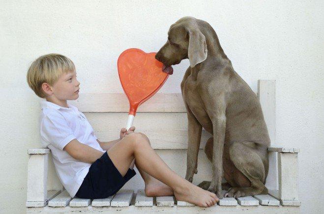 Bruma-photos-de-chien-1-659x436