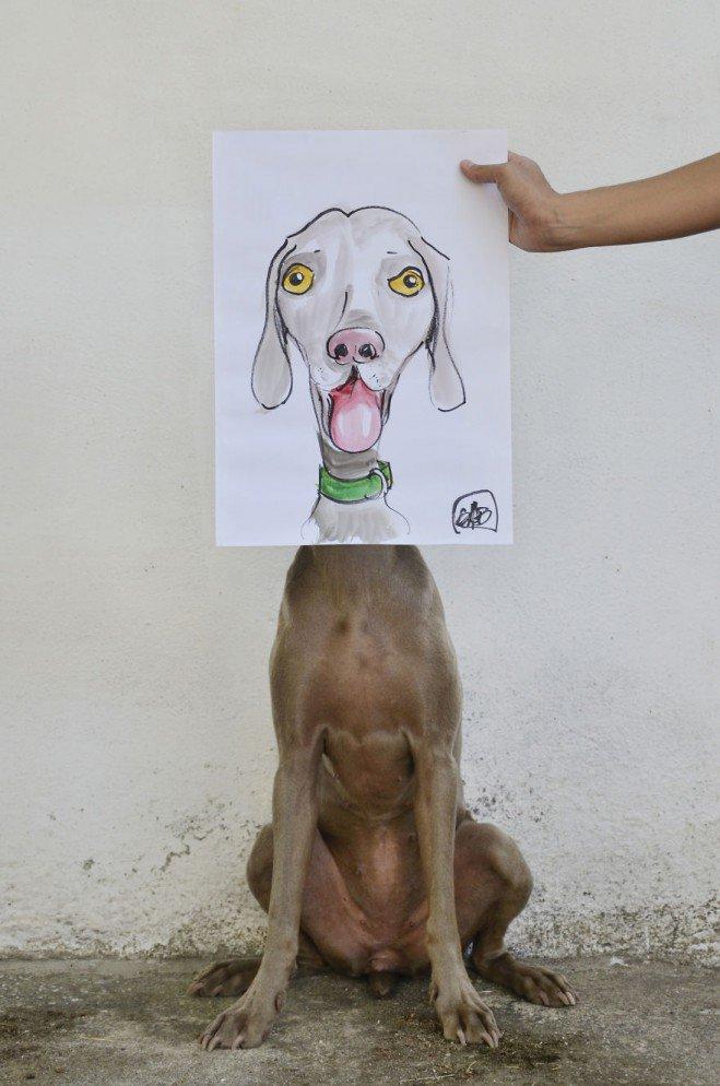 Bruma-photos-de-chien-2-659x994
