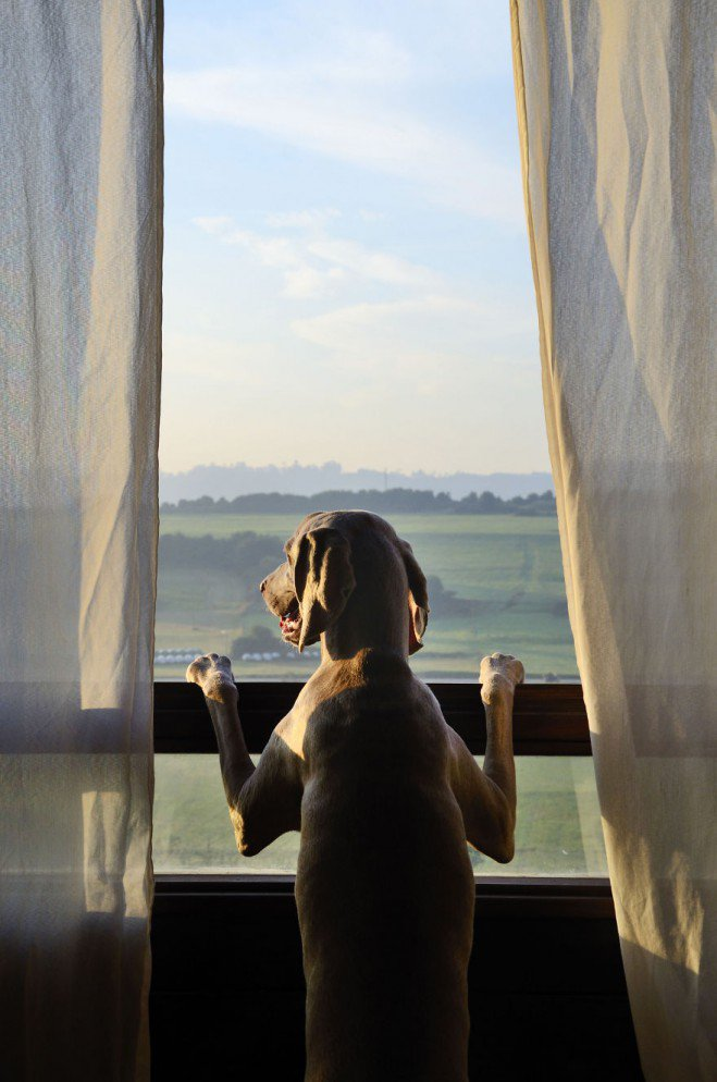 Bruma-photos-de-chien-4-659x994