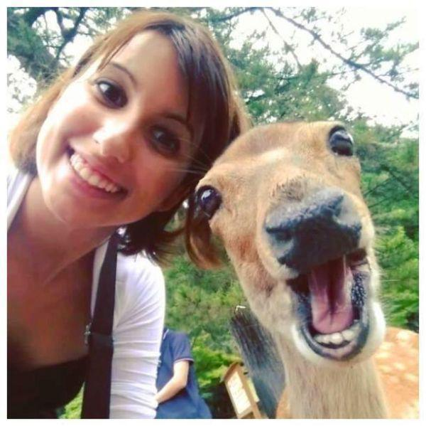 getting-a-good-selfie-with-an-animal-is-an-art-20-photos-1-L
