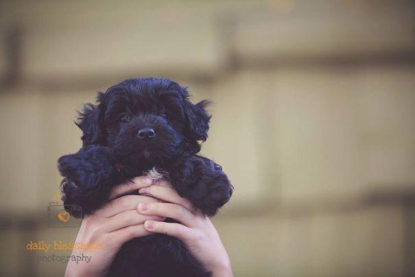morkiepoo-peluche-noir-chien
