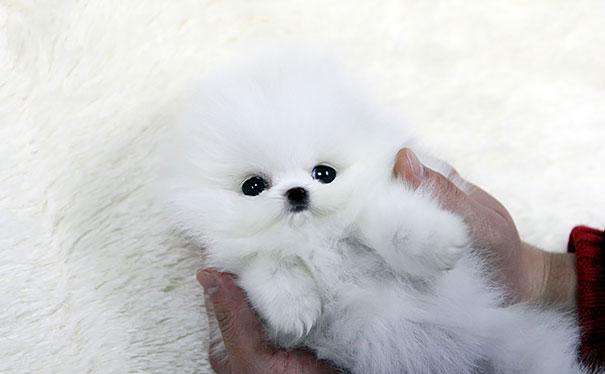 peluche-blanche-chien-2