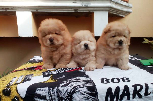 trois-chien-peluche