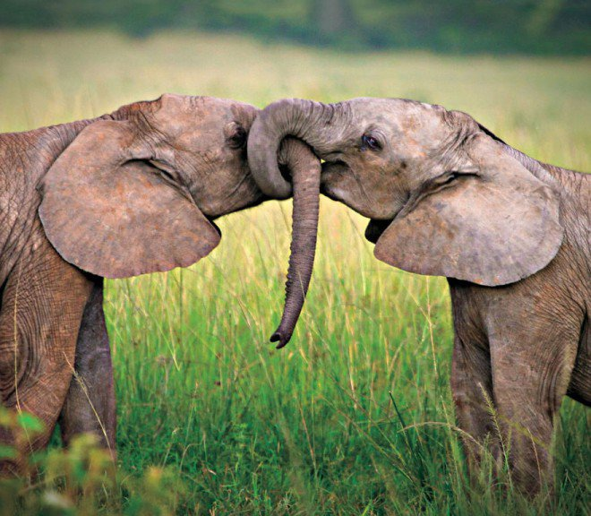 animal-couples-elephants__8801-L