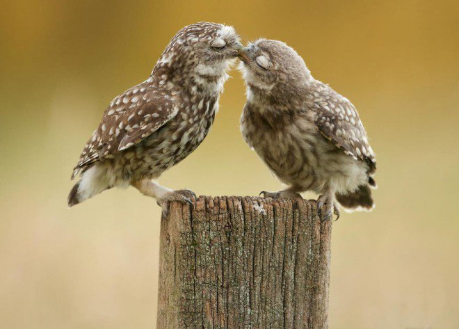 animals-love-couple-8__8801-L
