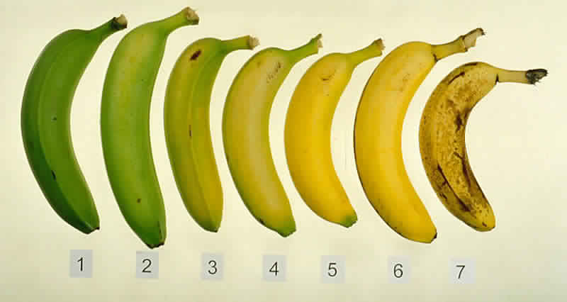 do-you-know-which-of-these-7-bananas-is-the-best-for-you-and-your-health