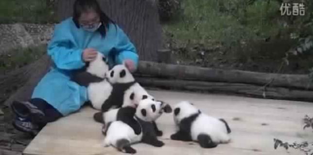 cette-femme-est-payee-30-000-euros-par-an-pour-caresser-des-pandas
