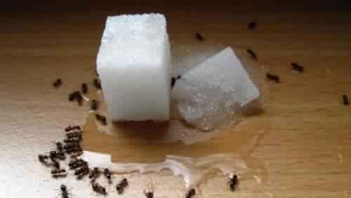 Voici 6 astuces tr s efficaces pour liminer les fourmis sans insecticide cocktail - Bicarbonate de soude fourmis ...