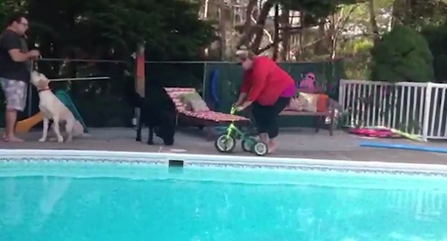 Une m re de famille fait du tricycle au bord de la piscine for Au bord de la piscine tours