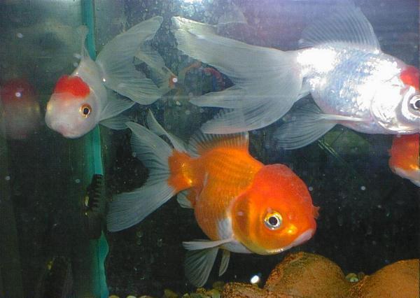 aquarium_tempere