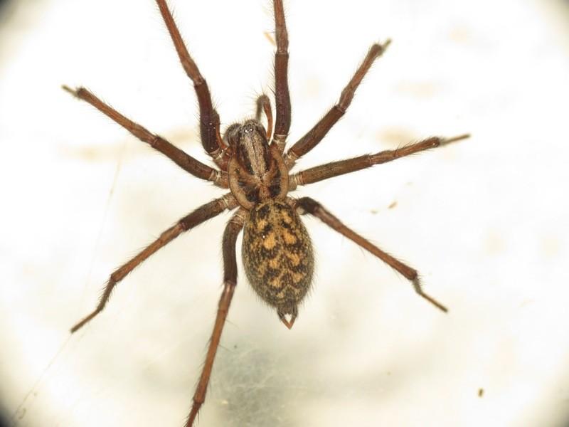 Vous n aimez par les araign es vous risquez de voir des araign es d barquer dans vos maisons - Une araignee dans la salle de bain ...
