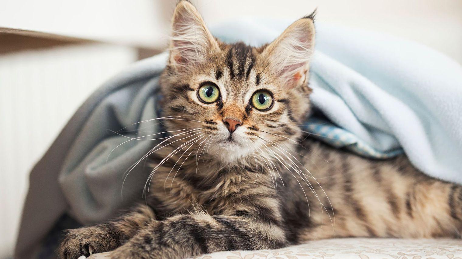 10-astuces-pour-rendre-votre-chat-heureux_5542219