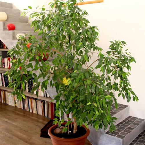 Cette plante limine toutes les toxines de votre maison - Les plantes depolluantes purifier l air de la maison ...