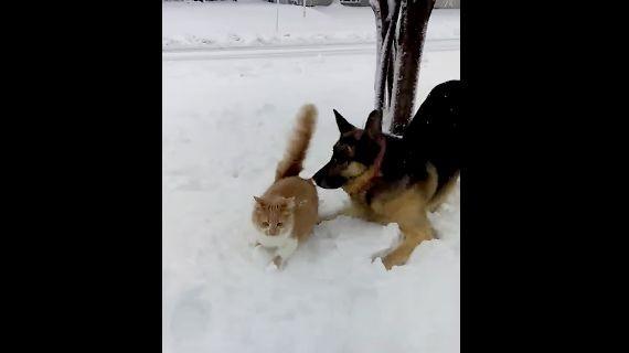 chat-chien-jouent-neige