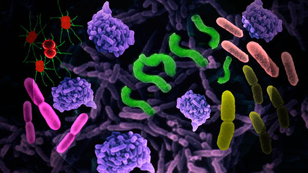 pom-bio-a-croquer-bacteries-et-infections_reference