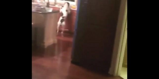 chien-gourmand-pris-flag