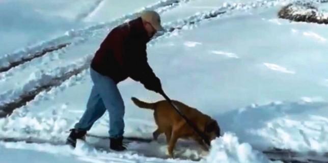dog-snow