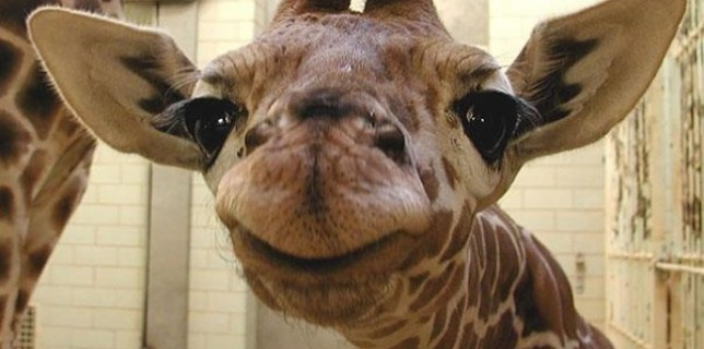 275110-cute-smiling-animals-11-650-40c651128c-1484650565