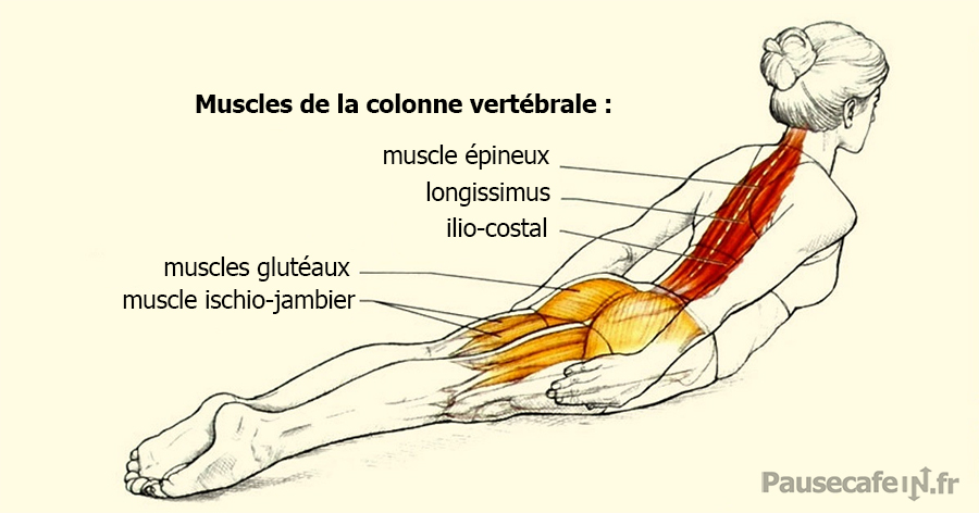 muscles-dos-planche