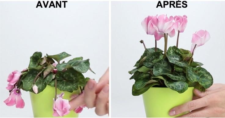 3 ingr dients qui ram neront votre plante favorite la vie cocktail. Black Bedroom Furniture Sets. Home Design Ideas