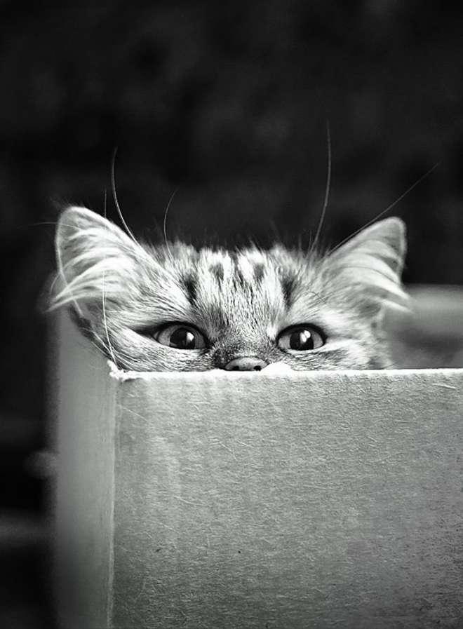 pourquoi un chat maigrit de l'arriere train