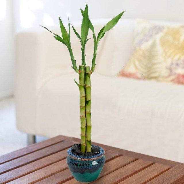 ces 10 plantes attirent les nergies positives dans un int rieur cocktail. Black Bedroom Furniture Sets. Home Design Ideas